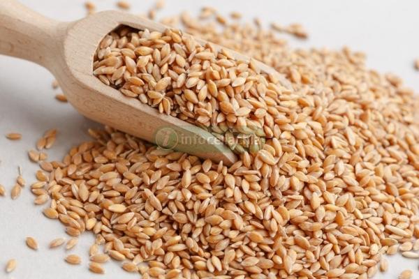 Celiachia, il pane di grano ogm senza glutine