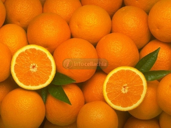 Dalle arance arriva una nuova farina senza glutine