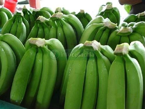 Dalle banane verdi una nuova pasta senza glutine