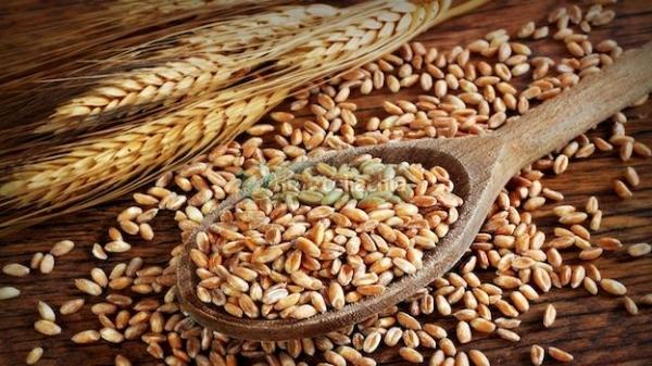Grano monococco: un'antica varietà in soccorso dei celiaci