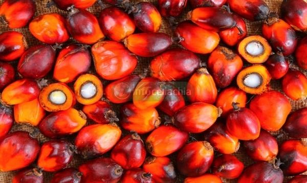 Senza glutine, ma pieni di olio di palma